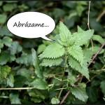 Plantas con carencias afectivas